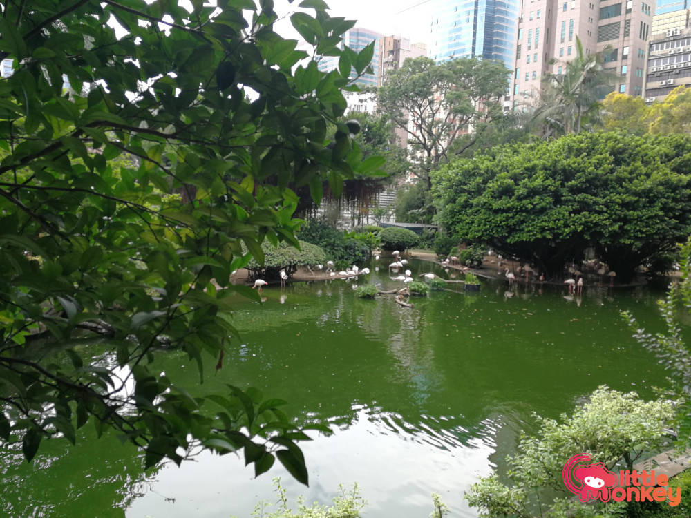 Kowloon Park's bird lake