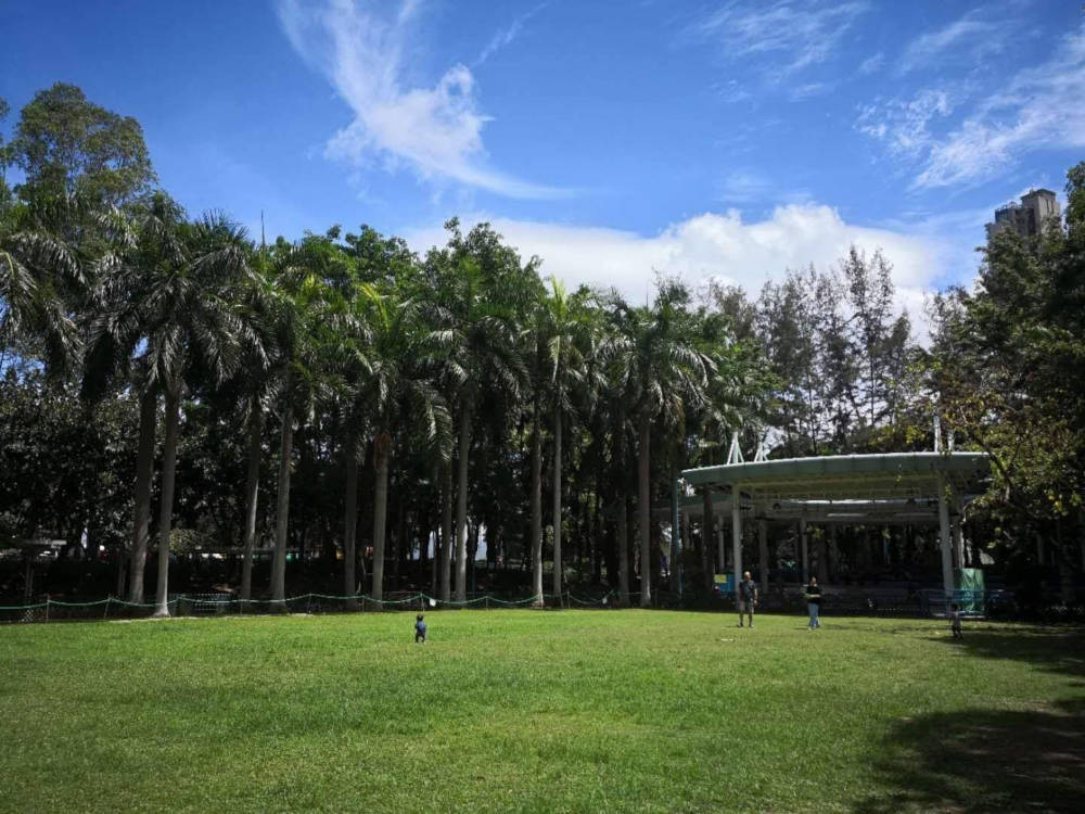 Tamar Park's greenery grass and trees