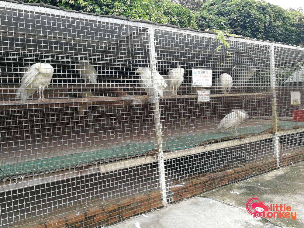 Tai Tong Organic EcoPark's Peacocks at the Animal Village