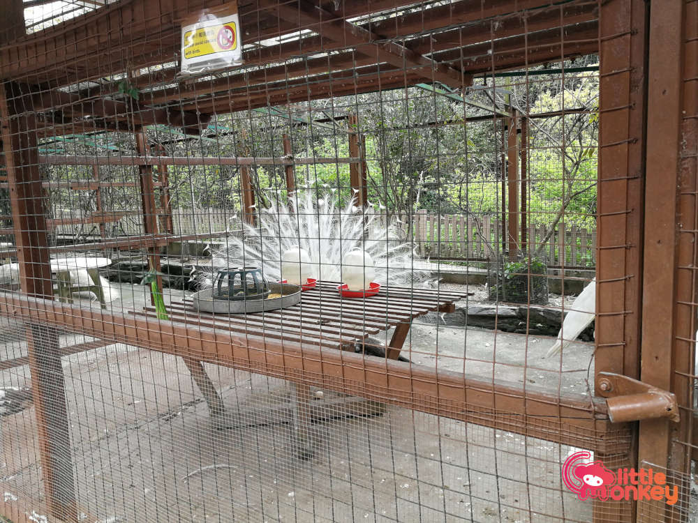 Tai Tong Organic EcoPark's Peacocks at the Animal Village