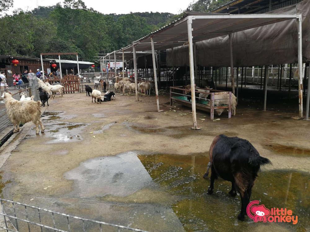 Tai Tong Organic EcoPark's Goats at the Animal Village