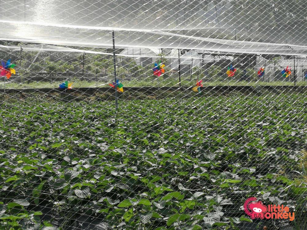 Tai Tong Organic EcoPark organic farming