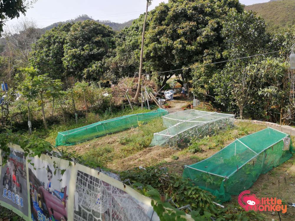 Tai Tong Organic EcoPark farming area