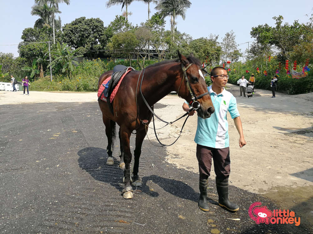 Horse for riding at Tai Tong Organic EcoPark